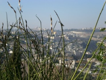 New Israel Fund Starts Tackling Environmental Issues