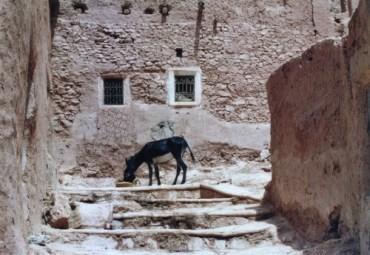 Morocco Developing an Environmental Charter