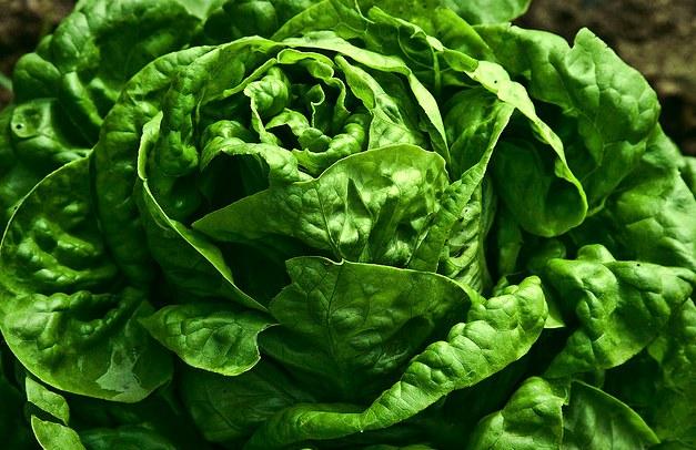 lettuce lady amman