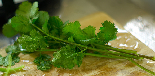 Fresh Tomato-Coriander Salad to Spice up Your Summer