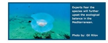 New Jellyfish Species Tells a Tale of Global Warming
