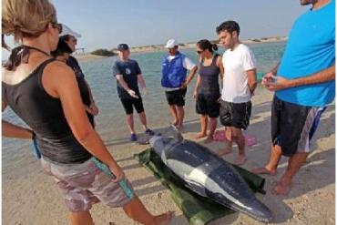 UAE Residents Learn To Save Inflatable Dolphins And Whales