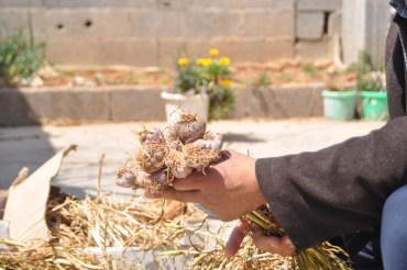 Gaza's Green Roofs of Herbs and Vegetables
