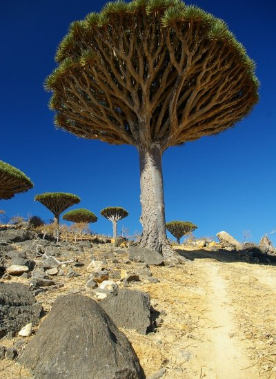 socotra-yemen-biodiversity