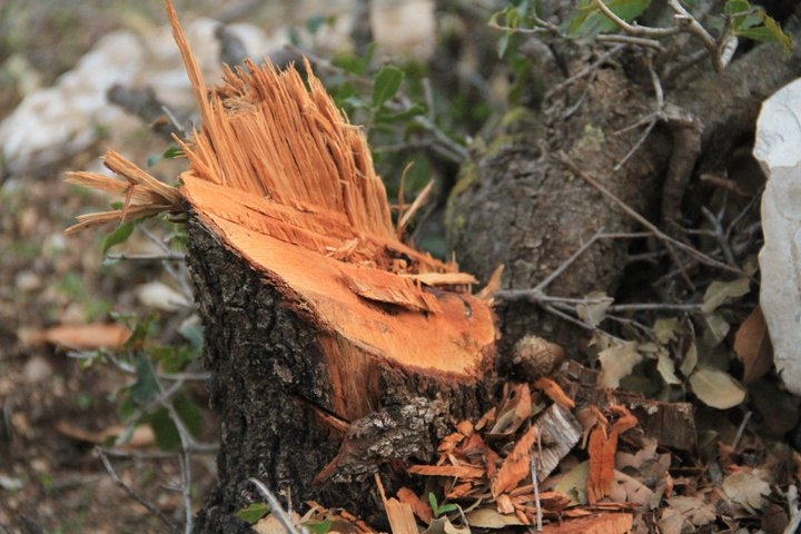 Jordan Reconsiders Deforestation Plans