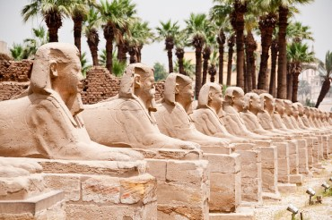 Ancient Egyptian Palm Trees Faces Extinction