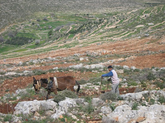 """west bank sustainable farm"""