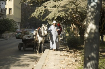 Horses: The Silent Victims of Egypt's Revolution