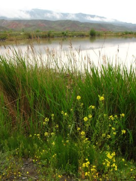 eastern turkey wetland
