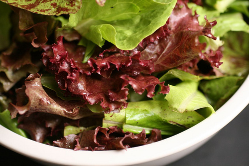 Quick Leafy Crops For The Urban Garden