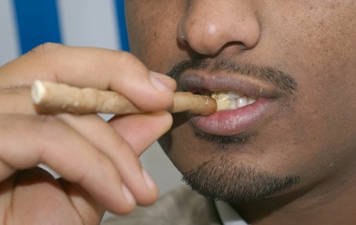 miswak toothbrish yemen