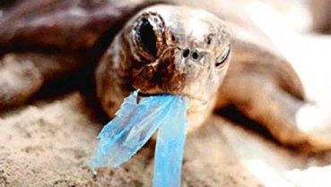 Plastic + Ocean = Very Sick Turtle