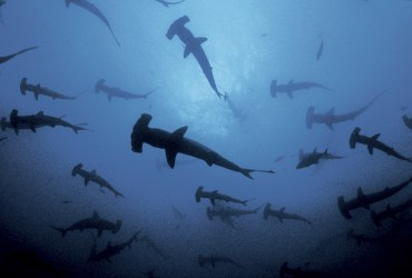 How Sharks Keep Us Breathing: An Interview with Filmmaker Jonathan Ali Khan