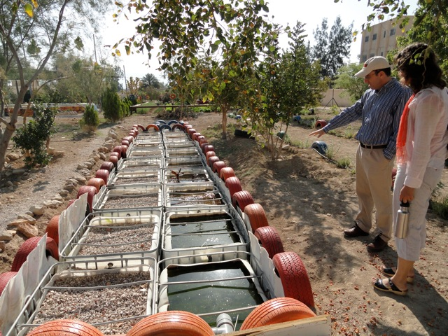 Treating greywater in Auja
