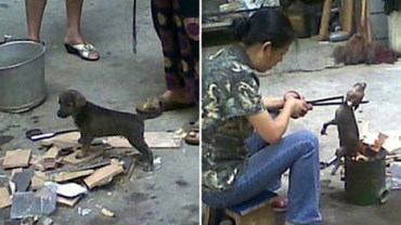Stray Pups Cooked Alive in China