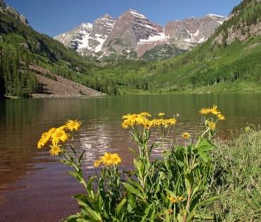 Eden Vardy Plants a Sustainable T.R.E.E. in Aspen