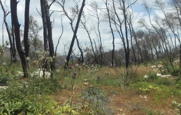 After the Fire: Israel's Carmel Forest Doesn't Need Our Help