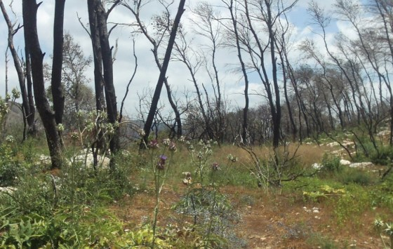 israel fire regrowth