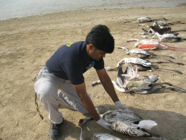 Crazy Kuwaitis Use Shotguns to Kill 12 Flamingos