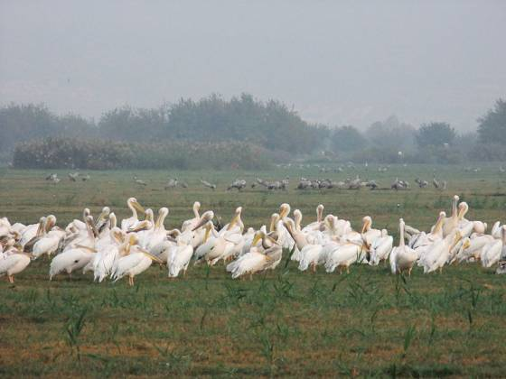 2nd International Ornithology Festival in the Galilee