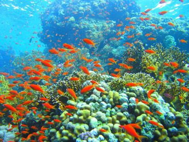 New Oil Slick in Egypt Threatens Red Sea Coral Reef