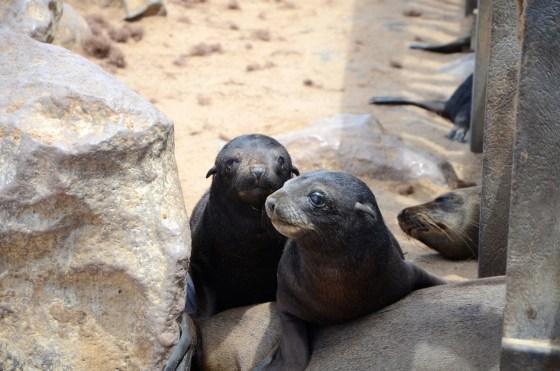 Namibia, seal hunt, Hatem Yavuz, animal cruelty, wildlife, activism, boycott, tourism, conservation