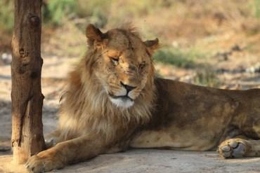 Mangled Wild Animals Stuffed and Displayed at Gaza Zoo