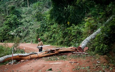 Jordanian Bank Sanabel Buys One Quarter of a Congo Forest