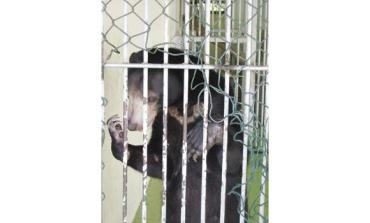 Caged Bear in Saudi Arabia Needs Rescuing