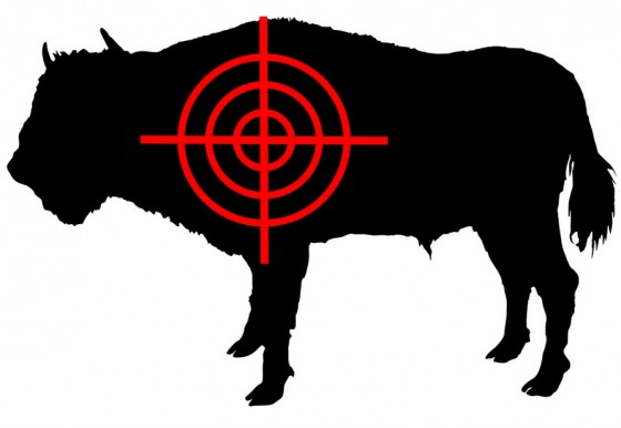 Syria's Cattle Caught in the Crossfire