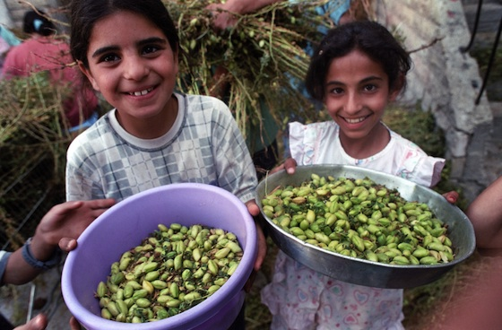 arab girls holding basket of food