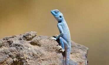 Animal Paparazzi for Jordan's Endangered Animals