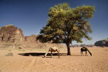 Jordan Terminates Uranium Mining License with French Firm AREVA