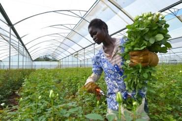 Israel Strengthens Environmental Ties to Africa: Part 2
