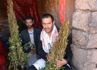 Khat Addiction Threatens Yemen's Future
