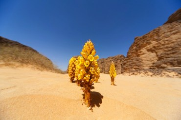 Moroccan Solar is Safe Despite Desertec Setbacks
