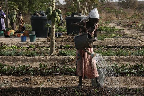 Climate Change Contributing to Mali-Algeria Conflict