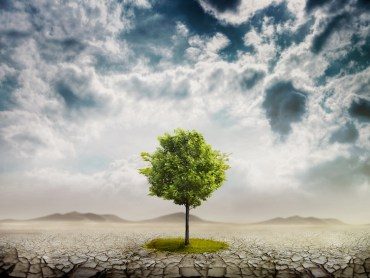 5 Reasons to be Grateful for Trees on Tu B'Shevat