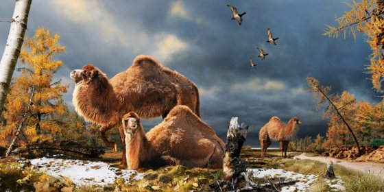 ancient camel, giant camels, Arctic, camel milk, Julius Csotonyi,