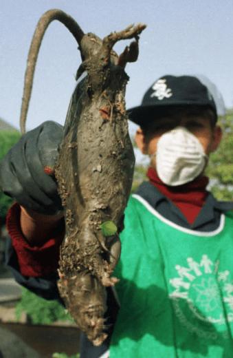 Iran's Monster Rats