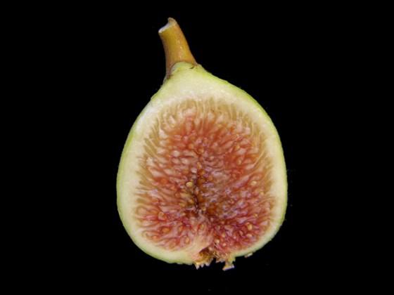 shtawi fig