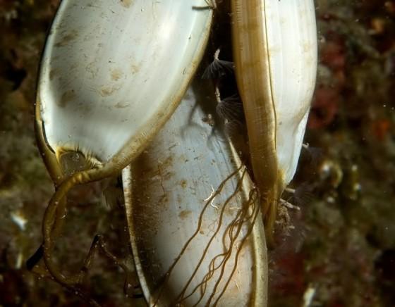 shark eggs in the sea
