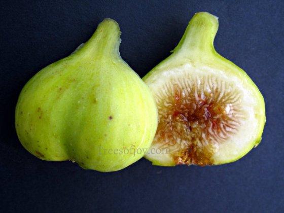 sumackie fig syria