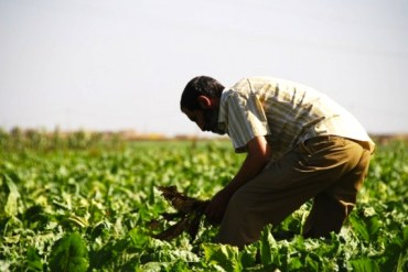 Direct Seeding Helps Moroccan Farmers Adapt to Climate Change