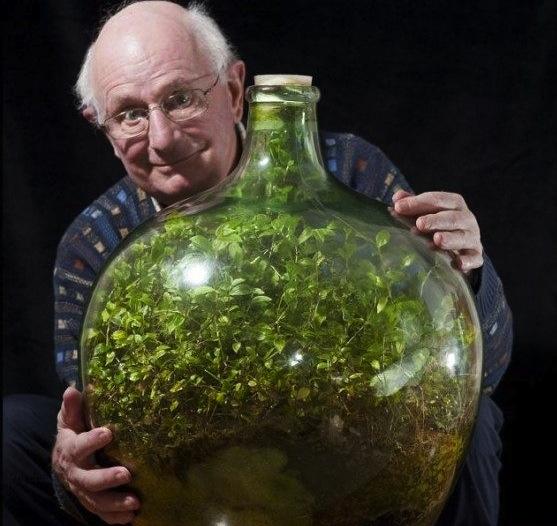 David-Latimer-bottle-terrarium