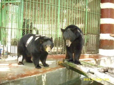Giza Zoo Kills Three Black Bears, Tries to Cover it Up