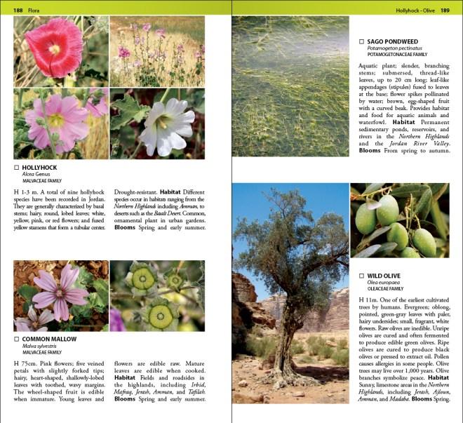 Jordan flora field guide book