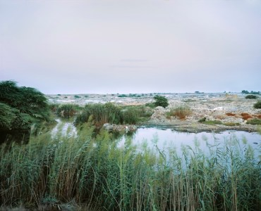 Reed Beds: Cleaning Waste Water in the Desert