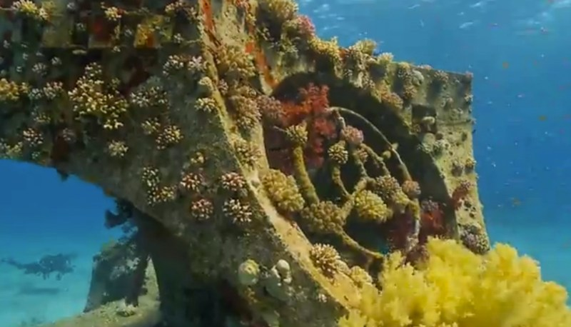 Divers Will Pay to Protect Coral Reef Biodiversity, New Study