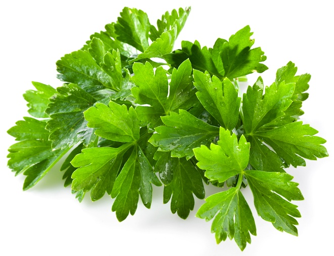 Cilantro Hailed for its Water Purification Properties